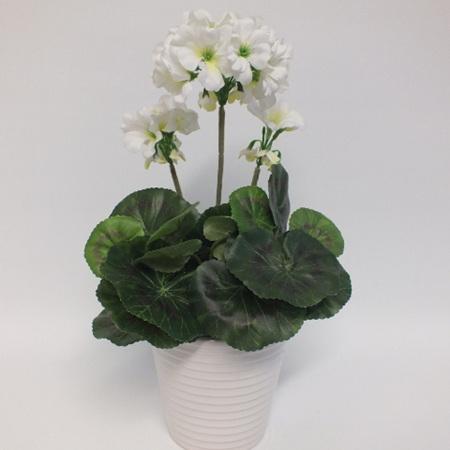 Geranium in ceramic pot2038