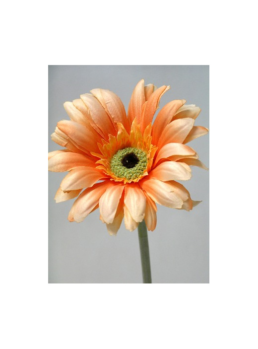 Gerbera wide petal artificial silk peach