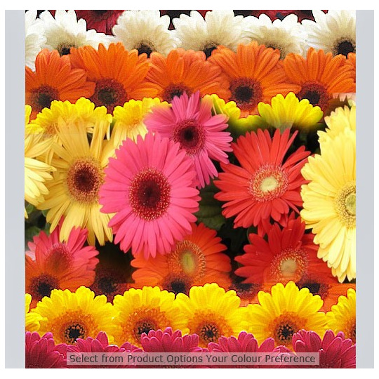 gerberas mixed