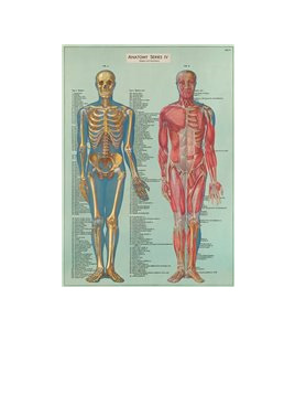 Gift wrap or poster - Anatomy
