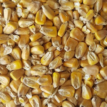 Gladfield Maize Malt