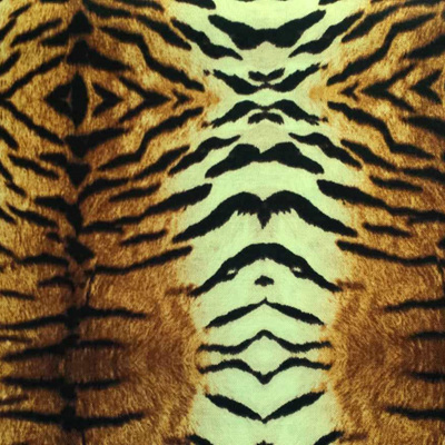 Go Wild - Tiger