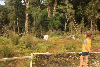 goat lyell saddle hut kids