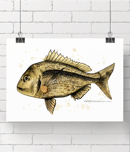 Gold Snapper limited edition print