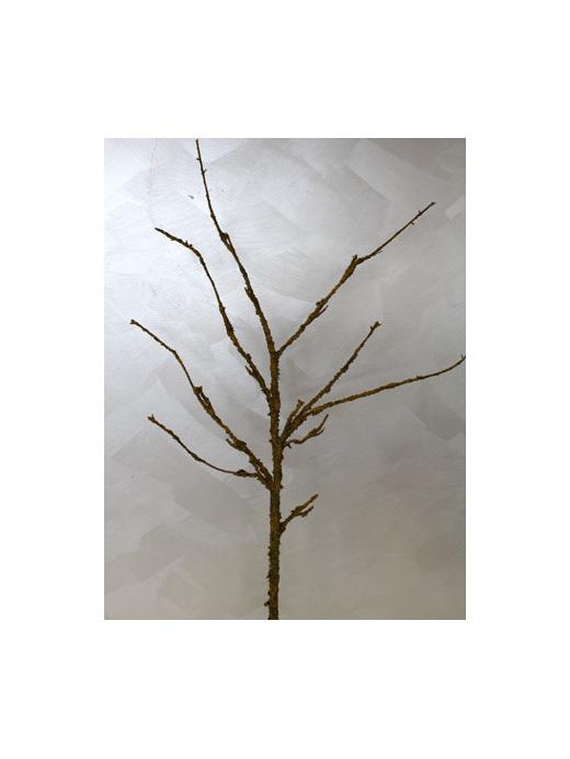 Golden lichen branch