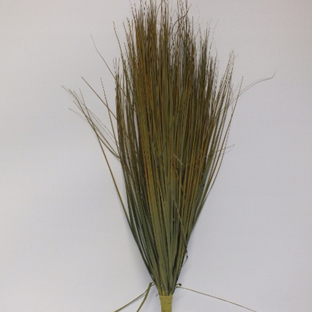 Grass Mountain Tussock 1286