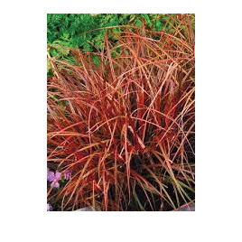 Grasses & Flaxes