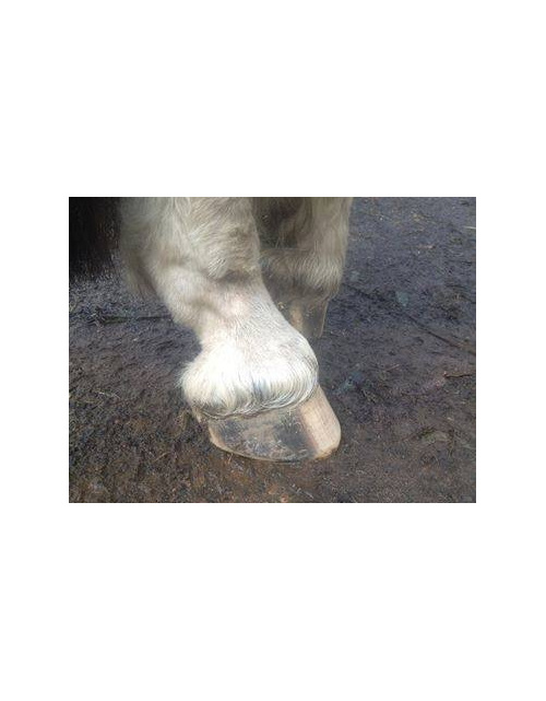 Greasy Heel / Mud Fever natural remedy for greasy heel / mud fever in horses