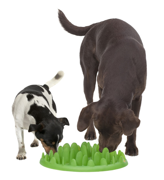 Green Interactive Dog Feeder/Bowl