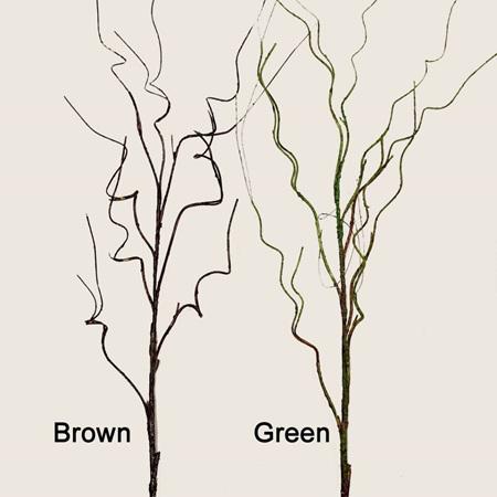 Green twig 1987