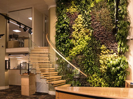 Green walls - your living artwork