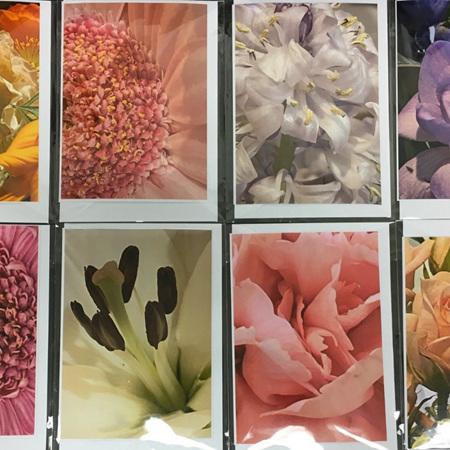 Greeting Cards - Flower Photographs - Blank Inside
