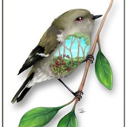 Grey Warbler Birds Eye View - A4 Print