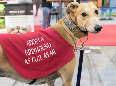 Greyhound adoption fees