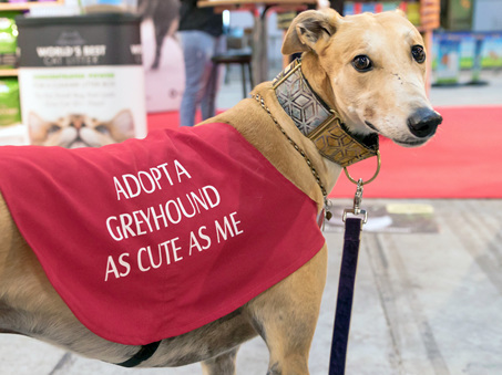 Greyhound adoption fees