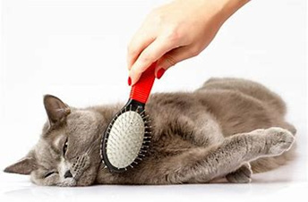 Grooming Products for Your Cat