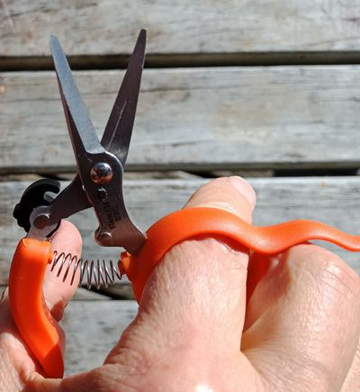 Hands free secateurs