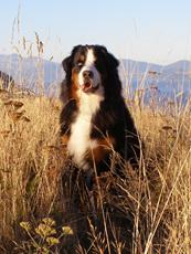 Healthy handmade dog treats for New Zealand  dogs