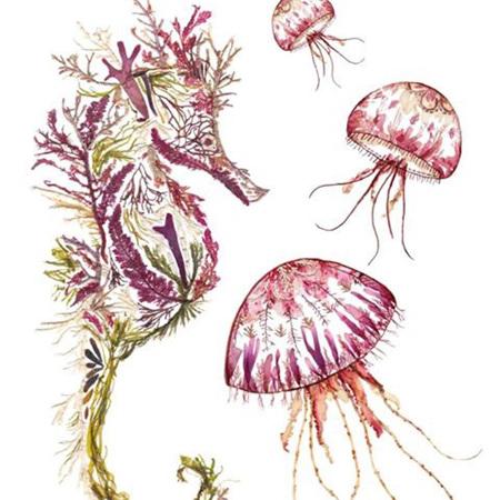 Helen Ahpornsiri Seaweed Seahorse