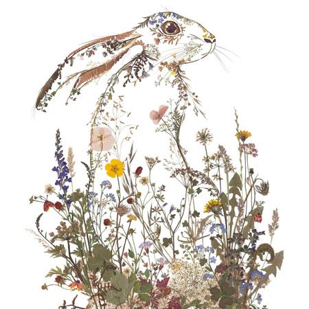 Helen Ahpornsiri Wildflower Hare Card