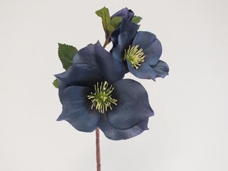 Hellebore Dark Blue 4432