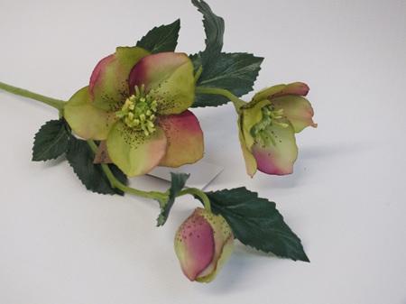 Hellebore Pink Green 4215