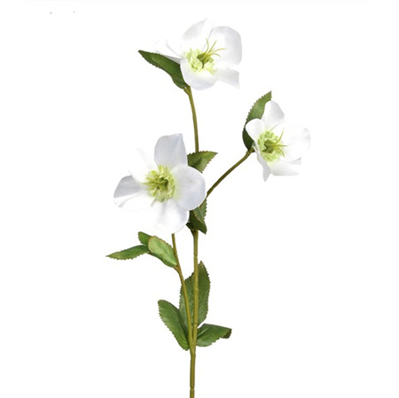 Hellebore white 4190