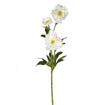 Helleborus cream 4195