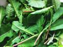 Herbalicious