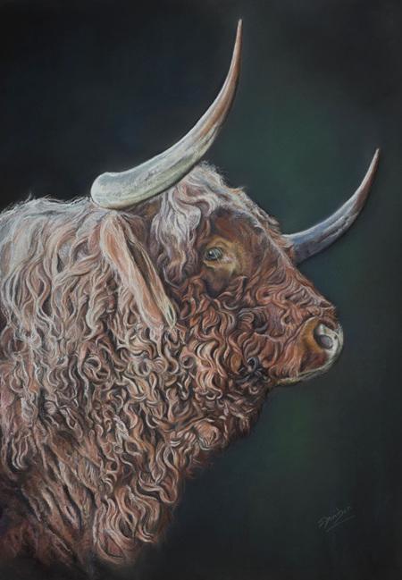 Highlander Bull by Julie Davidson