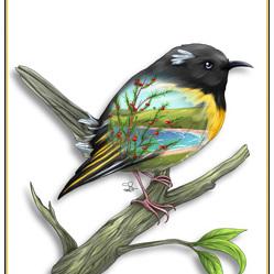 Hihi Birds Eye View - A4 Print