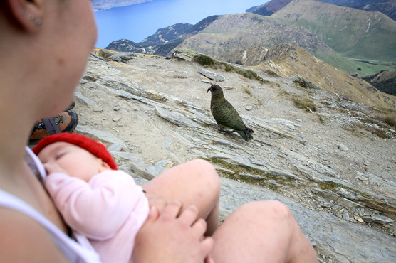 hiking tramping baby kea nz ben lomond queenstown