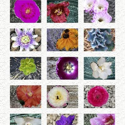 Homeward - Flower Panel