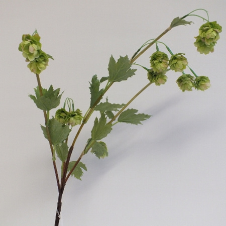 Hop Flower 4429