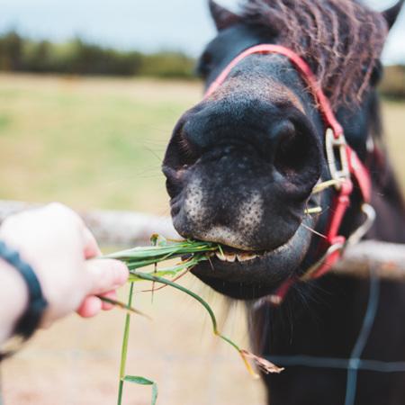 Horse Food & Supplements