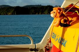 Hospi in the Bay of Islands