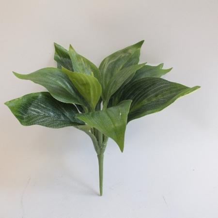 Hosta Plant 1942