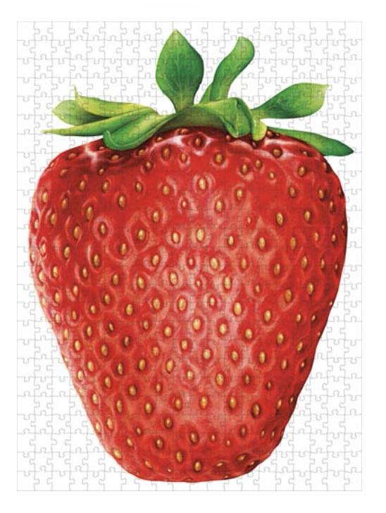 Hummingbird 1000 Piece Jigsaw Puzzle: I Like Strawberry at www.puzzlesnz.co.nz