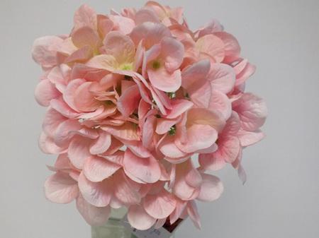 Hydrangea French light pink 4229