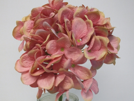 Hydrangea French Rose Pink 4230