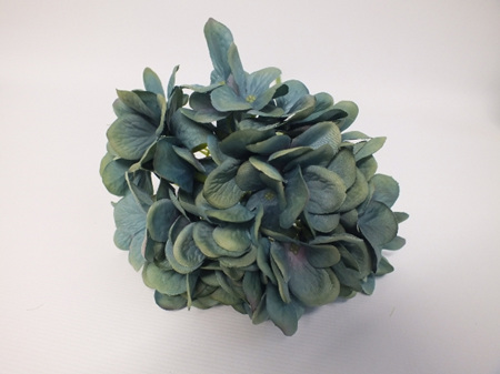 Hydrangea French Teal  4522
