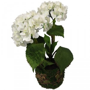 Hydrangea in a moss pot 1477 White