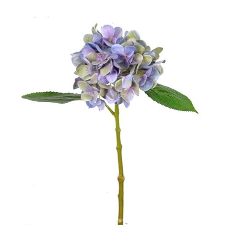Hydrangea Isabella Lavender 4570