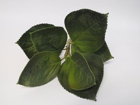 Hydrangea Leaf stem 1817