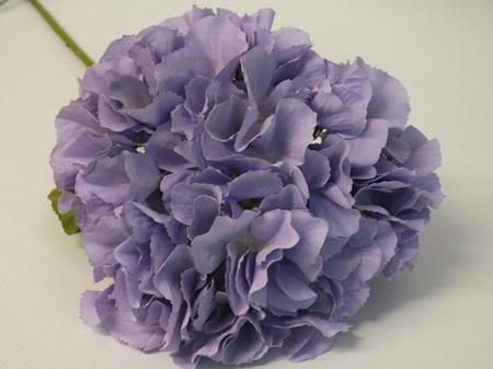 Hydrangea Lilac 4495