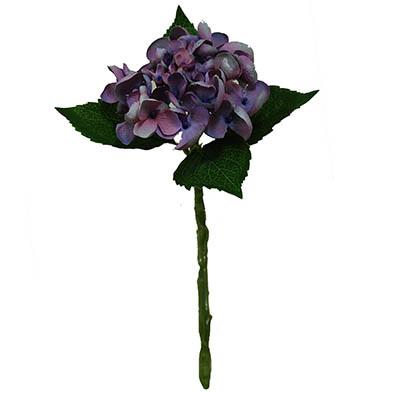 Hydrangea short stem 1913
