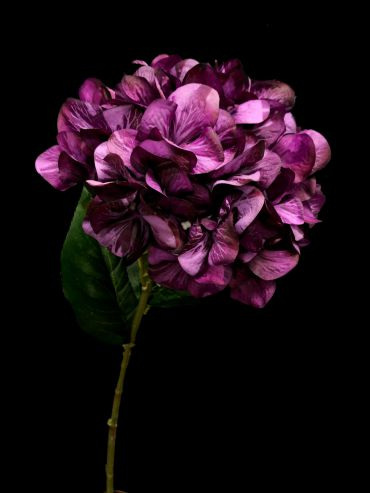 Hydrangea Stem Dark Purple 4168