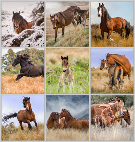 Images For Sale  - Proceeds to horses in KHH care