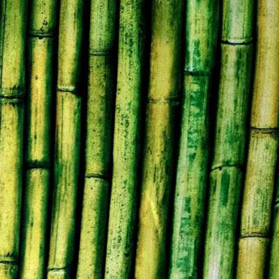 Imaginings - Bamboo
