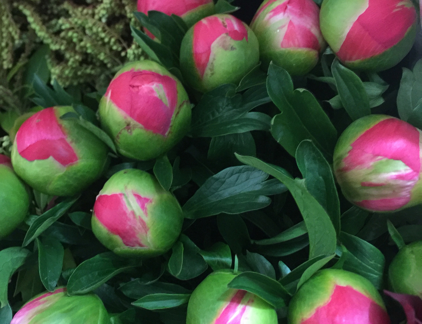 Peonies in store now.